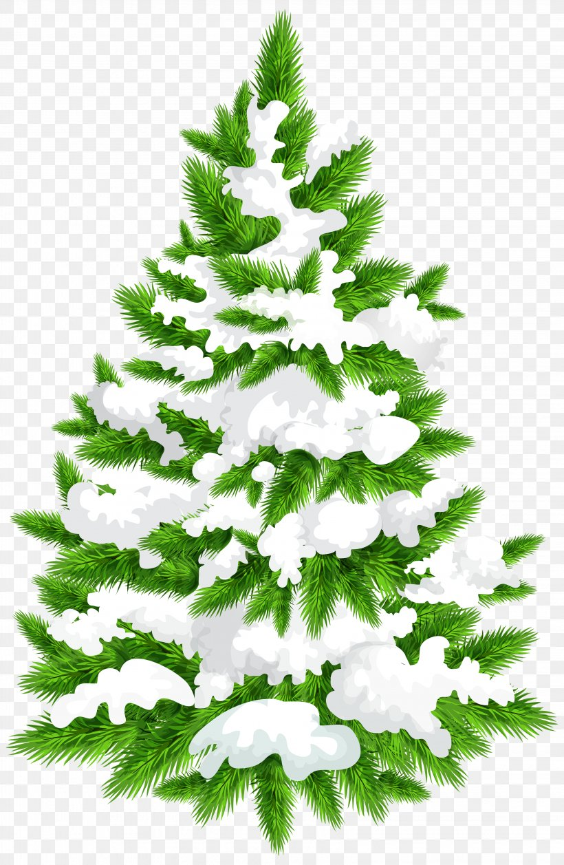 Pine Christmas Tree Clip Art, PNG, 3261x5000px, Tree, Arecaceae, Branch, Christmas, Christmas Decoration Download Free