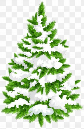 Snowy Pine Tree Clip Art Image - Pine Christmas Tree Clip Art PNG