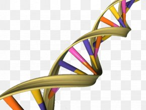 Double Helix - The Double Helix: A Personal Account Of The Discovery Of The Structure Of DNA Nucleic Acid Double Helix A-DNA Genome PNG