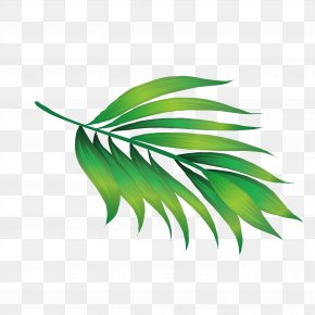 Hawaii Leaves - Hawaii Icon PNG