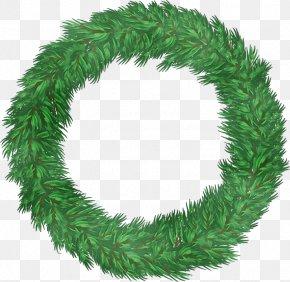 Plant Fir - Christmas Decoration PNG