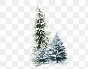 Winter Pine - Winter Wallpaper PNG