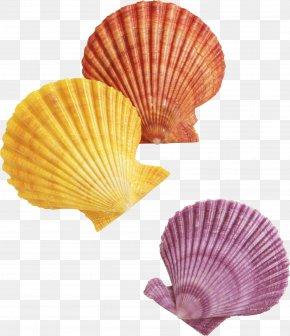 Seashell - Clip Art PNG