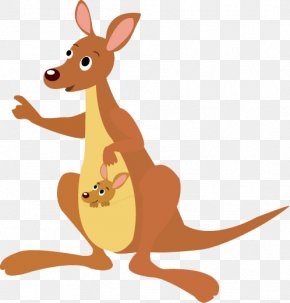 Kangaroo - Kangaroo Koala Stock Illustration Illustration PNG