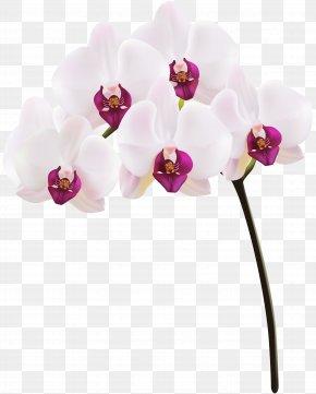 Orchid Clip Art Image - Orchids Clip Art PNG