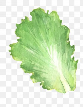 Vector Cabbage Leaves - Leaf Vegetable Chinese Cabbage PNG