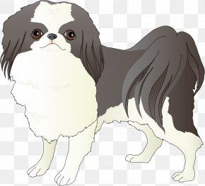 A Drum Dog - Japanese Chin Dog Breed Companion Dog Spaniel Toy Dog PNG