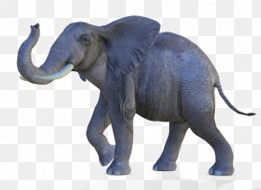 African Elephant Transparent - African Bush Elephant Asian Elephant African Forest Elephant PNG