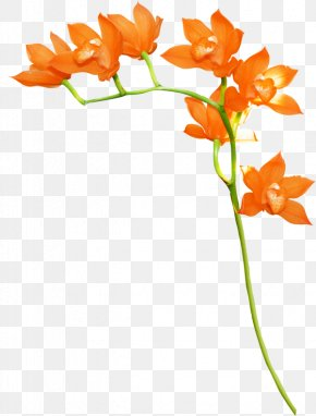 Orange - Orange Floral Design Flower Clip Art PNG