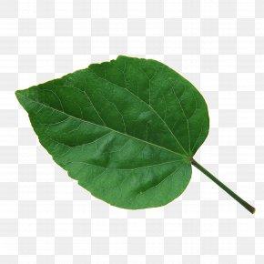Leaf - Leaf Green Chlorophyll CMYK Color Model The Interpretation Of Dreams By The Duke Of Zhou PNG