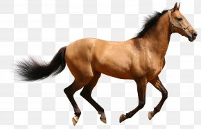 Horse 3d Animal - Horse Desktop Wallpaper Clip Art PNG