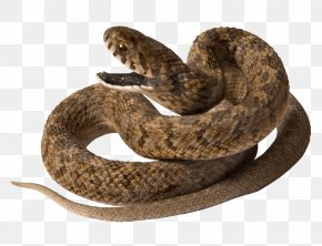 Snake Image Picture Download - Snake Raccoon Reptile PNG