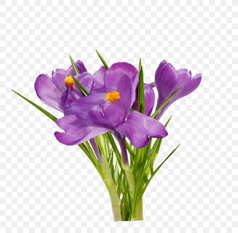 First Spring Flowers Clip Art, PNG, 800x800px, First Spring Flowers, Crocus, Cut Flowers, Dahlia, Flower Download Free
