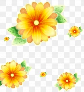Taro Flower - Common Sunflower Poster PNG