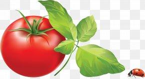 Tomato - Tomato PNG
