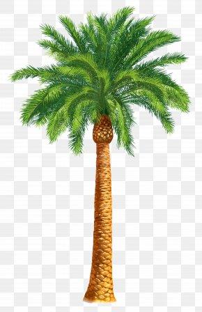 Palm Tree - Arecaceae Tree Date Palm Washingtonia Filifera Clip Art PNG