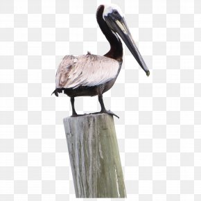 Pelican Pic - Pelican Products Icon PNG