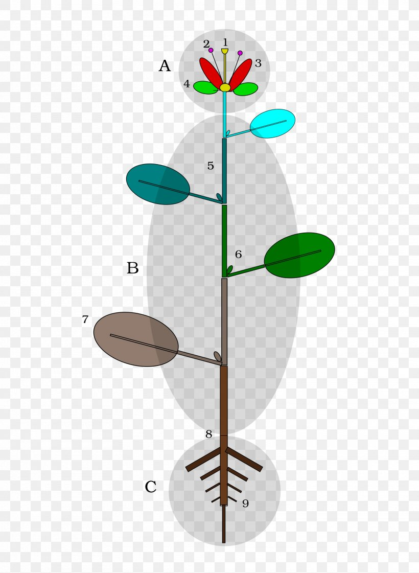 Plant Stem Flower Leaf Seed, PNG, 1920x2626px, Plant, Angiosperm Phylogeny Group, Auglis, Botany, Branch Download Free