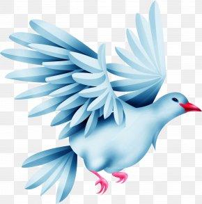 Green Pigeon - Rock Dove Columbidae Bird PNG