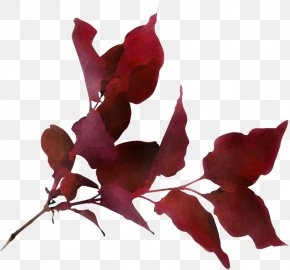 Perennial Plant Twig - Flower Red Leaf Plant Petal PNG
