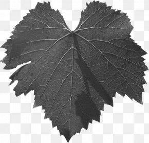 M Common Grape Vine TreePlumett Al52 - Leaf Grape Leaves Black & White PNG