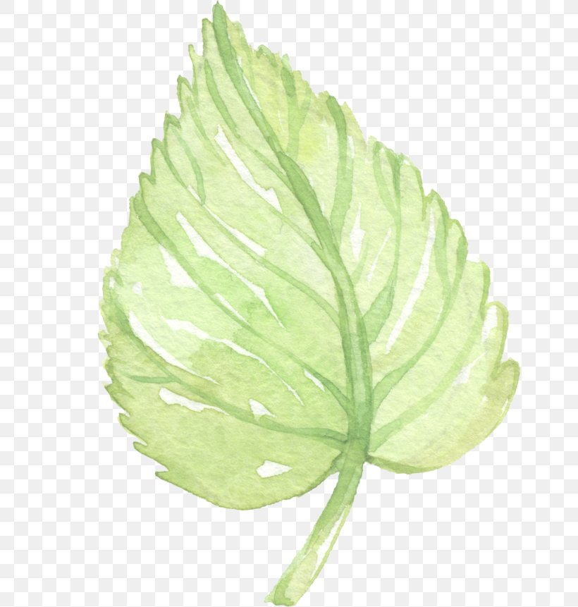 Leaf Watercolor Painting Clip Art, PNG, 658x861px, Leaf, Computer Software, Plant, Plant Stem, Poster Download Free