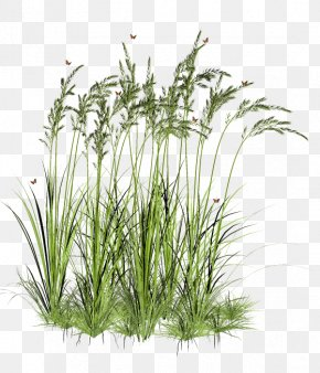 Grass - Tree Aquatic Plant PNG