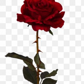 Rose - Rose Lossless Compression Clip Art PNG