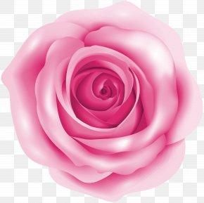 Pink Rose Clip Art Image - Rose Pink Clip Art PNG