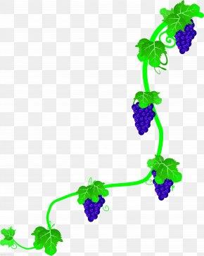 Green Grape Vine,Rattan,vine - Common Grape Vine Wine Rattan PNG