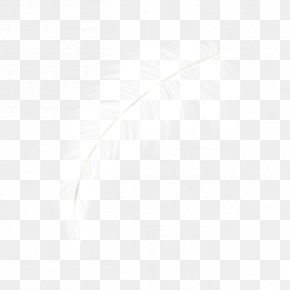 White Feather - Computer Graphics PNG