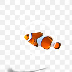 Fish - Fish Download Wallpaper PNG
