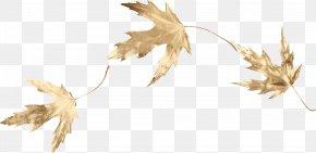 Gold Leaf - Maple Leaf Clip Art PNG