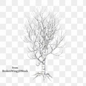 Winter Trees - Drawing Trees Clip Art PNG