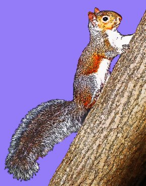 Grey Squirrel - Eastern Gray Squirrel Clip Art Openclipart Free Content PNG