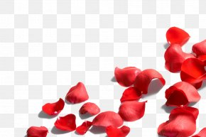Rose Petal - Petal Flower Rose PNG