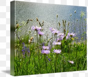Gallery Wrap Canvas Photography Art Grasses PNG