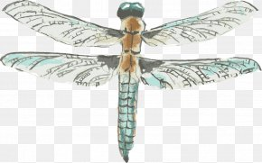 Drawing Vector Dragonfly - Dragonfly Drawing Watercolor Painting PNG