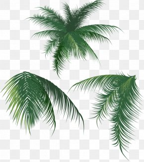 Coconut Leaves - Coconut Leaf Arecaceae PNG