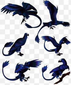 Bird - Bird Beak Feather Fauna Crow PNG