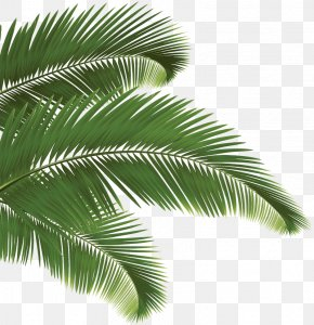 Leaf - Arecaceae Palm Branch PNG