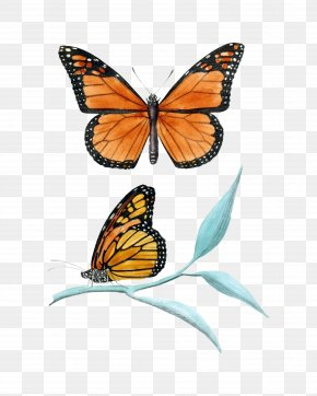Monarch Butterfly - Monarch Butterfly Insect Clip Art PNG