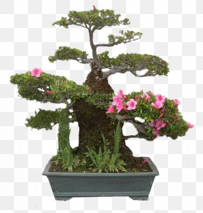 Bonsai - National Bonsai Foundation United States National Arboretum Pinus Thunbergii Azalea PNG