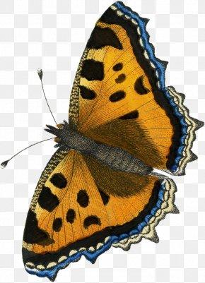 Moth Drawing Monarch Butterfly - Monarch Butterfly Gossamer-winged Butterflies Clip Art Brush-footed Butterflies PNG