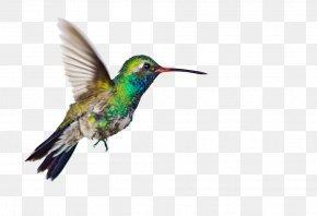 Hummingbird Clipart - Seven Letters From Paris: A Memoir E-book Barnes & Noble Nook Amazon Kindle Reading PNG