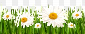Grass And White Flowers Clipart - White Clover Flower Grasses Lawn PNG