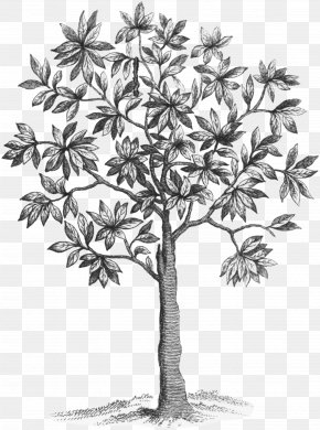 Blue Fairy Wings Dollar Tree - Asian Palmyra Palm /m/02csf Drawing Leaf Plant Stem PNG