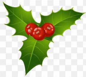 Mistletoe Cliparts - Mistletoe Phoradendron Tomentosum Christmas Clip Art PNG