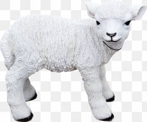 Oveja - Sheep Goat Cattle Animal PNG