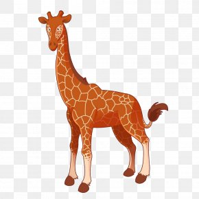 Cartoon Giraffe - Giraffe Cartoon Royalty-free Illustration PNG